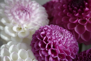 Cadres-photo bureau Dahlia Pink and white dahlia flowers. Close up