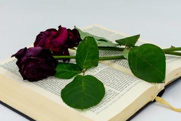 vertrocknete Rosen auf einer deutschsprachigen Bibel