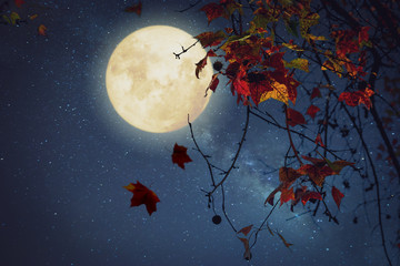 Wall Mural - Beautiful autumn fantasy - maple tree in fall season and full moon with star. Retro style with vintage color tone. Halloween and Thanksgiving in night skies background concept.