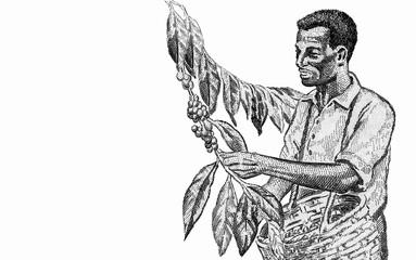 Coffee harvest,. portrait from Ethiopia 5 Birr 2003 Banknotes. Uruguayan money. Closeup Collection..