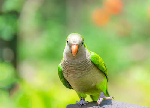 A beautiful parrot in a wildlife park.