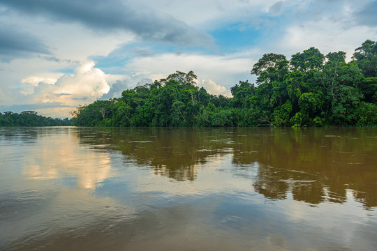Landscape of the Amazon tropical rainforest along the Aguarico river inside the Cuyabeno Faunistic Reserve near Lago Agrio, Ecuador, South America.