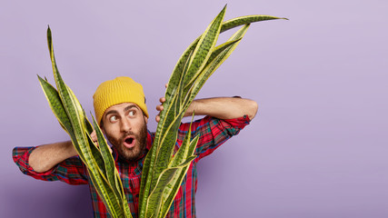 Surprised young European man looks curiously through sansevieria plant, has embarrassed facial expression, wears yellow hat and plaid shirt, isolated over purple background with blank space.