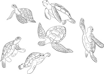 set of sea turtle isolated white background