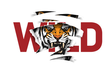 wild slogan ripped off with tiger Fotomurales