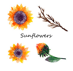 Beautiful floral collection with sunflowers bouquet, leaves, branches,Bright watercolor sunflowers composition set. wedding, invitation, template card, Birthday.