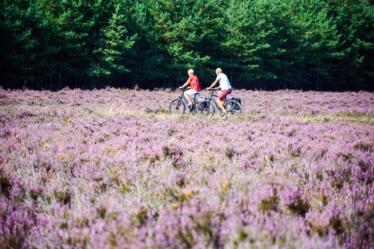 Active seniors riding bicycle through purple blooming heather field