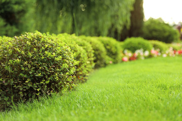 Poster Garden Picturesque landscape with beautiful green lawn on sunny day. Gardening idea