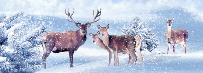 Fototapete - Group of noble deer in a snowy winter forest. Christmas artistic image. Winter wonderland. Banner format.