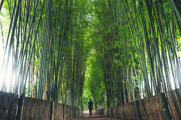 Foto auf AluDibond Bambusse Bamboo The bamboo pathway is a tunnel