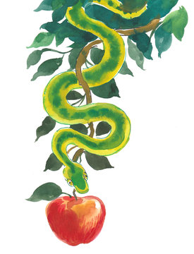 Snake and apple. Ink and watercolor illustration