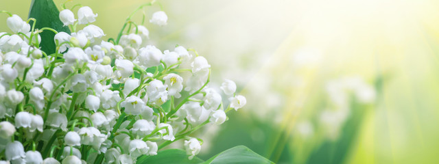 Wall Murals Lily of the valley Lily of the valley (Convallaria majalis), blooming spring flowers, closeup with space for text