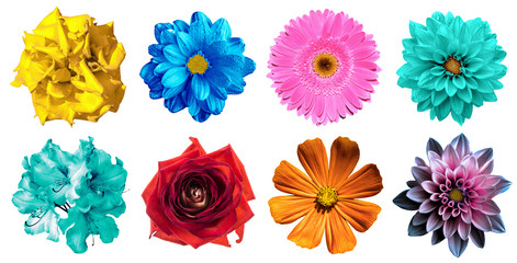 Pack of natural and surreal blue, orange, red, turquoise, yellow, white and pink flowers isolated on white. High quality detailed photo