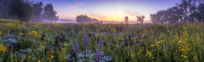 Fototapeta Twilight on a field covered with flowers in summer morning with fog.