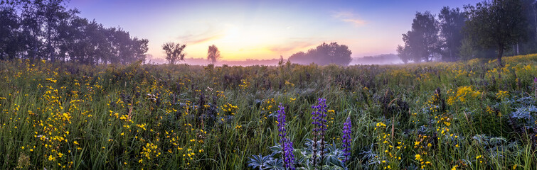 Twilight on a field covered with flowers in summer morning with fog.