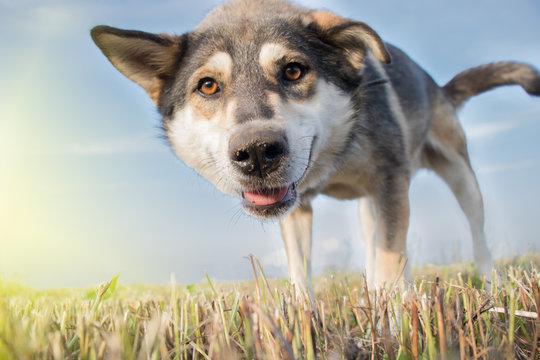 Close-up of dog looking into camera