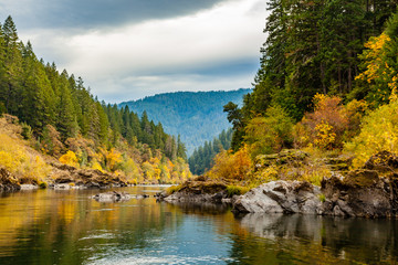Foto op Aluminium Bos rivier Fall colors of orange and yellow leaves in a calm section of the rogue river with pine trees on the left and the river gently winding to the right
