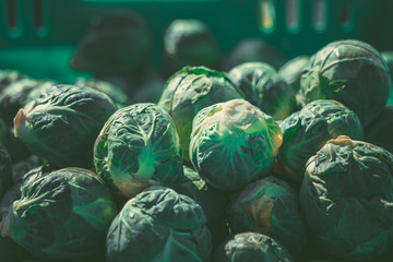 Acrylic Prints Brussels Green brussel sprouts at the market. green brussel sprouts background
