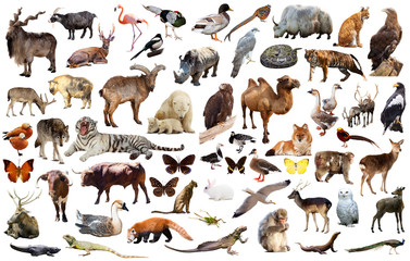 animal collection asia Wall mural
