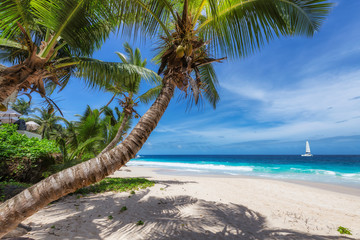 Fototapete - Sandy beach with coco palm and a sailing boat in the turquoise sea on Paradise island.