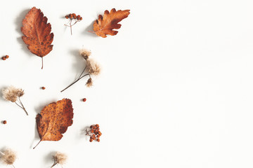 Autumn composition. Dried leaves, flowers, rowan berries on white background. Autumn, fall, thanksgiving day concept. Flat lay, top view, copy space Fototapete