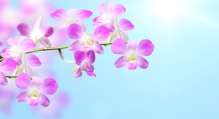 Fototapete - Flowers of orchid on blurred sunny background