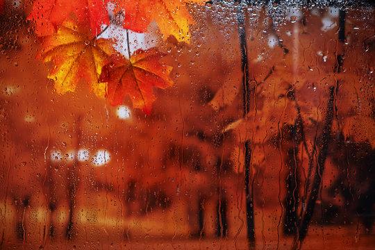 Autumn rain outside the window