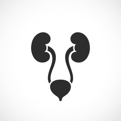 Urinary system vector icon