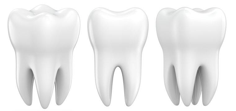 Set of dental premolar teeth 3d models as a concept of dental examination teeth, dental health and hygiene. 3d rendering illustration isolated on white background.