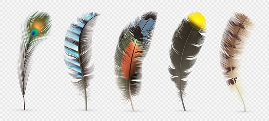 Realistic bird feathers. Detailed colorful feather of different birds. 3d vector collection isolated on transparent background. Illustration feather bird, peacock fluffy elegance plumage Fotomurales