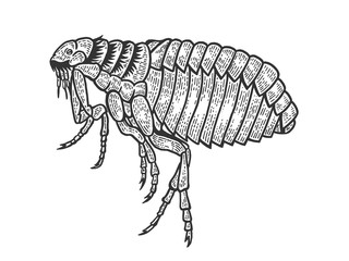 Flea louse insect sketch engraving vector illustration. Scratch board style imitation. Black and white hand drawn image.