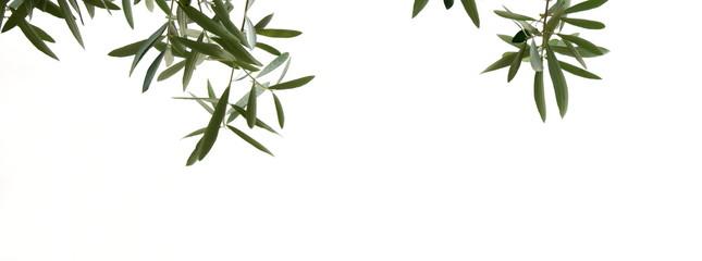 Olivenzweige mit Oliven, isoliert und freigestellt vor hellen Hintergrund Fototapete
