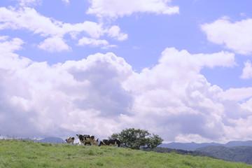 高原の牧場