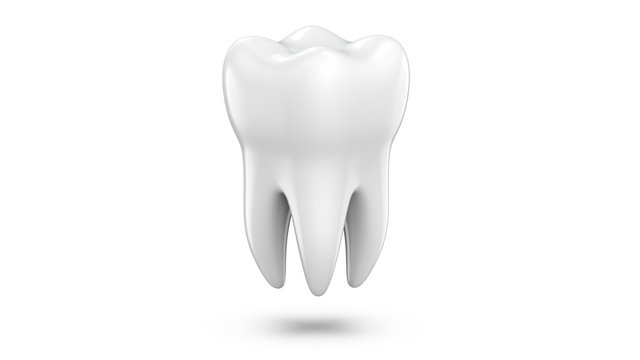 Dental 3d model of premolar tooth as a concept of dental examination teeth, dental health and hygiene. 3d rendering illustration isolated on white background.