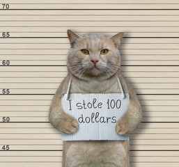 "The cat criminal has the sign around his neck that says "" I stole 100 dollars "". Lineup background."