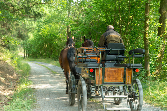 A carriage is in the woods. It is pulled by two horses (Saxon Thuringian heavy warm blood) The coachman waits for guests. Summer with sunshine.