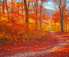 Printed roller blinds Magenta Pathway in the forest at autumn