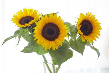 Ein Strauß Sonnenblumen in einer Glasvase