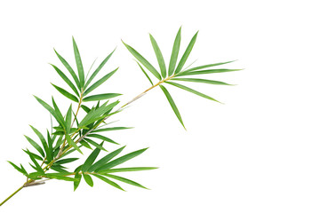 Wall Mural - Bamboo twig with green leaves the ornamental forest garden plant isolated on white background, clipping path included.