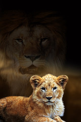 Wall Mural - Male lion and cub portrait on savanna landscape background