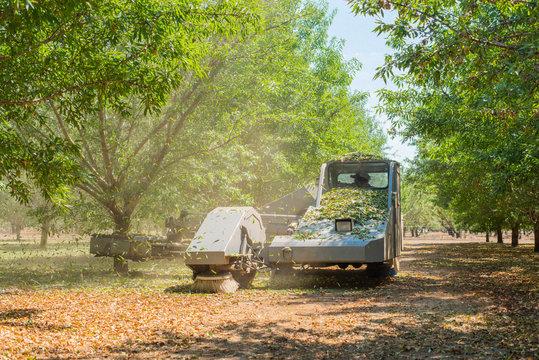 almond tree shaker shaking trees, leaves falling from trees being shaken, tree shaker during harvest season