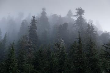 Mists and Temperate Rainforest, Southeaast Alaska