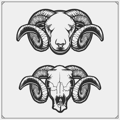 Rams and skull ram with with beautiful swirling horns. Vector illustration.