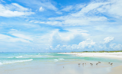 Acrylic Prints Coast Panorama of the Beautiful White Sand Beach of the Florida Gulf Coast