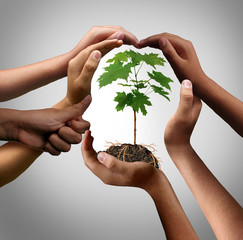 Fototapeta Multicultural Hands Holding A Plant obraz