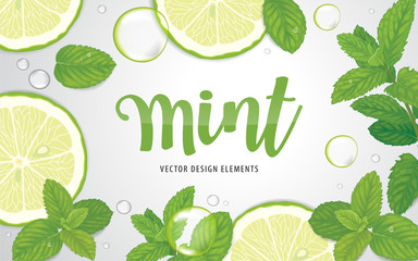 Fototapeta Green mint leaves with lime on background template. Vector set of herbal element for advertising, packaging design, greeting card and fashion design. obraz