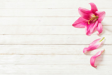 pink lily flowers on white wooden background