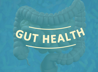 Gut bacteria, microbiome. Magnification of bacteria inside the intestines, concept, representation. 3D illustration.