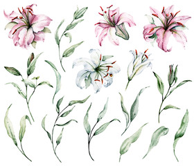 Watercolor flowers lilies and green leaves set. Floral illustrations isolated on white background. Hand drawing. Perfectly for wedding, birthday, party, other greetings design.