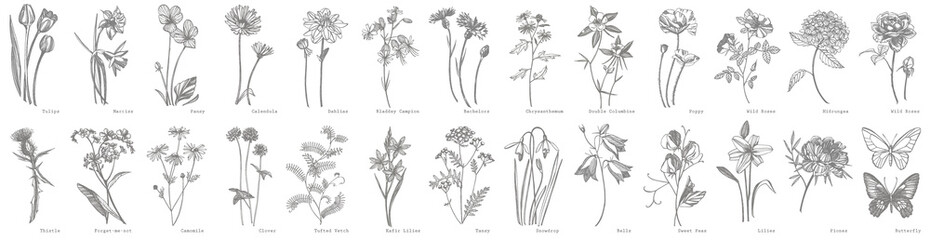 Door stickers Retro Collection of hand drawn flowers and herbs. Botanical plant illustration. Vintage medicinal herbs sketch set of ink hand drawn medical herbs and plants sketch
